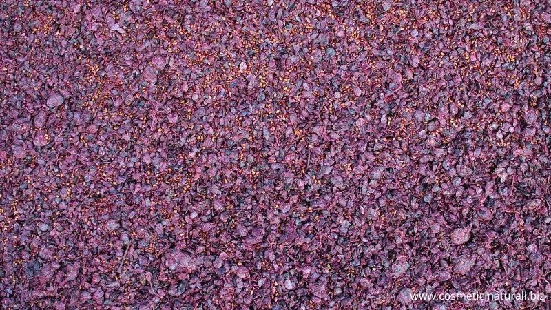 Vinacce con cui viene prodotta la linea di cosmetici naturali antiossidanti Biofficina Toscana